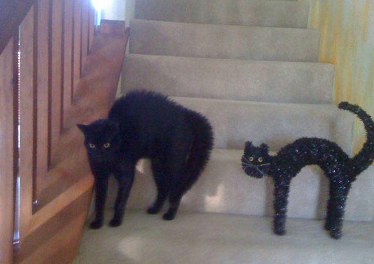 Kočka a kočka