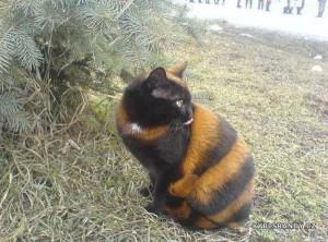 Kočka čmelák
