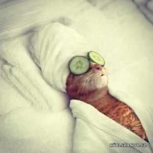 I kočka dokáže relaxovat