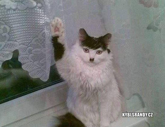 Kočka Hitler