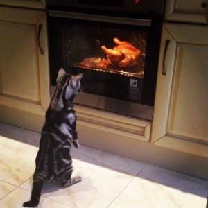 Kočka má chuť na pečínku