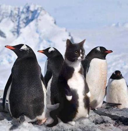 Kočka mezi tučňáky
