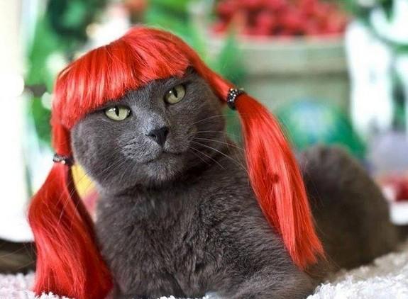 Kočka parádnice