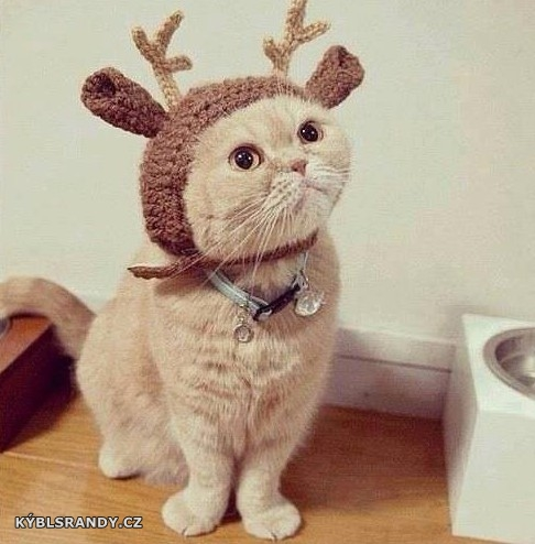 Kočka s rohama