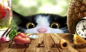 Kočka šmíračka