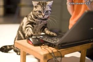 Ta kočka to s počítačem fakt umí