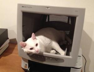 Kočka v monitoru