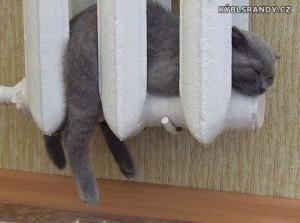 Kočka v radiátoru