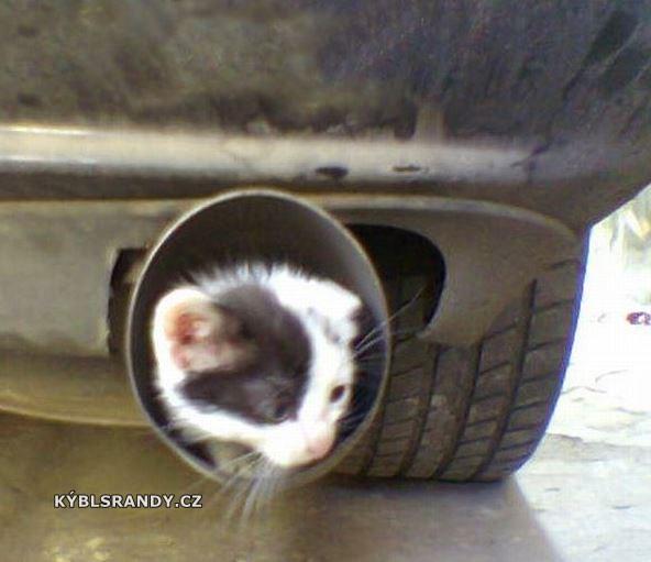Kočka ve výfuku