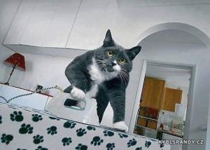 Kočka žehlí