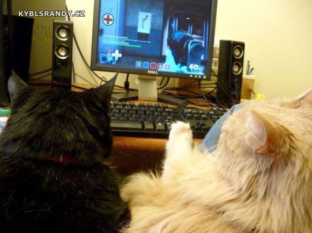 Kočky pařicky