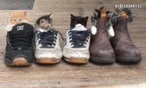 Kočky v botách