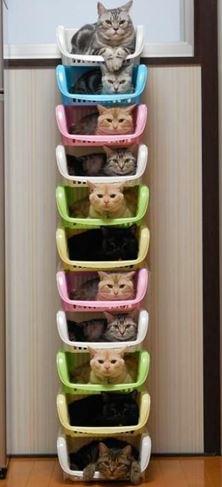 Kočky v pelíškách