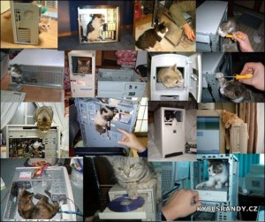 Kočky v počítači