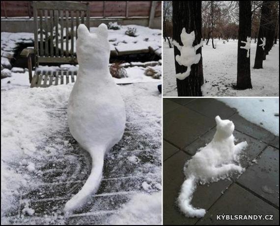 Kočky ze sněhu