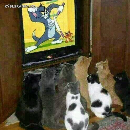 Kočky čučí na Toma a Jerryho
