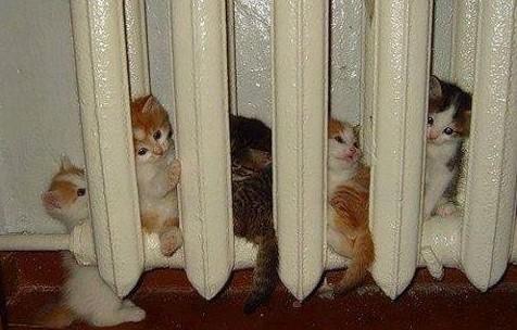 Koťatům je asi zima