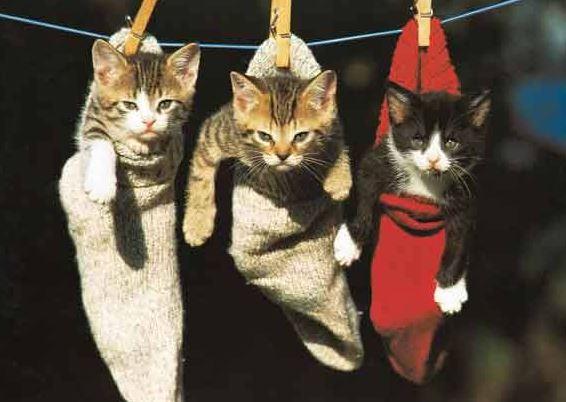 Krásná koťátka v ponožkách