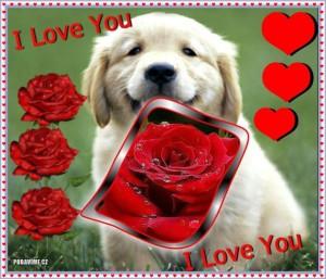 Krásné zamilované obrázky