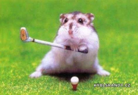 Křeček hraje golf