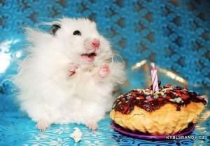 Křeček má první narozeniny