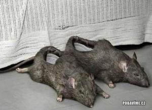 Krysí bačkory