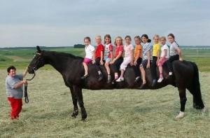 Kůň pro 10 dětí