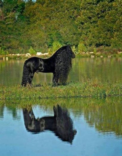 Kůň s trvalou