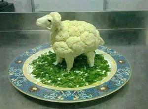 Květáková ovce