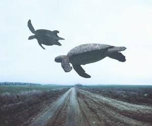 Létající želvy