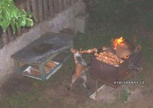 Liška má chuť na grilovačku