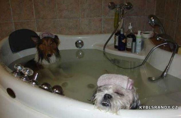 Luxusní psí koupel