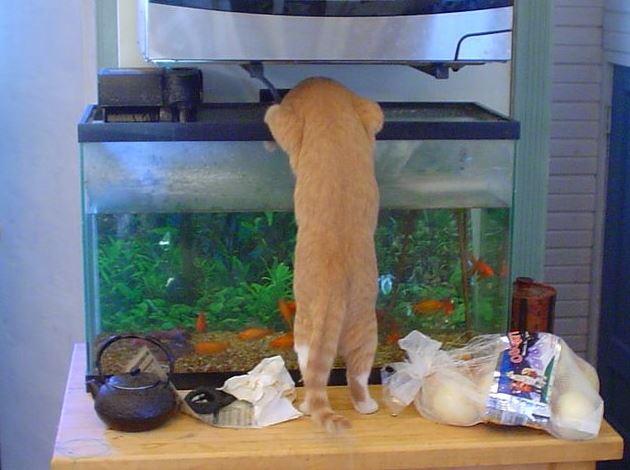 Kočka má chuť na rybyčky