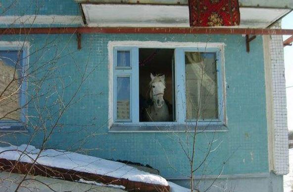Máme doma koně