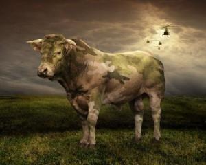 Maskáčová kráva