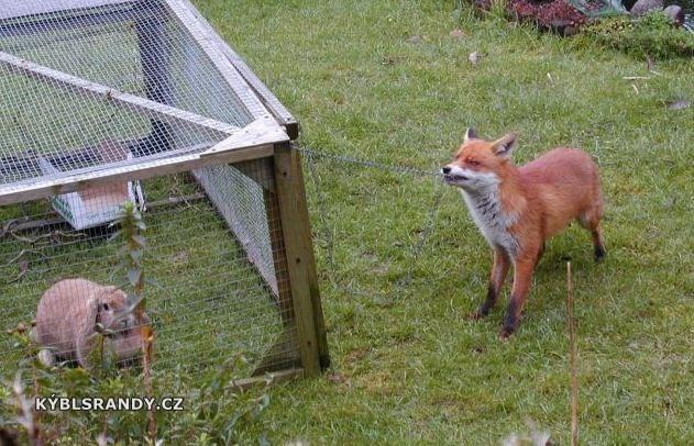 Mazaná liška