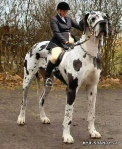Místo koně pes