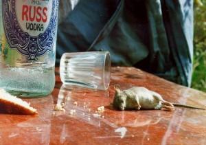 Myš přebrala alkohol