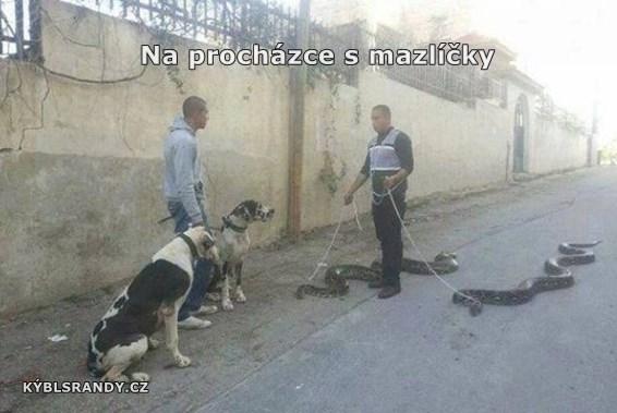 Na procházce s mazlíčky