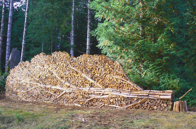 Naštípané dřevo - strom