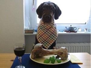Nejlepší oběd pro psa