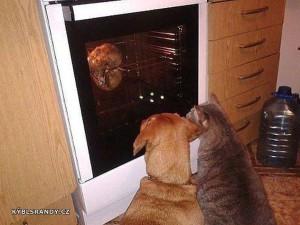 Nejlepší podívaná pro psa a kočku