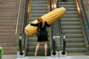 Obrovský kukuřice