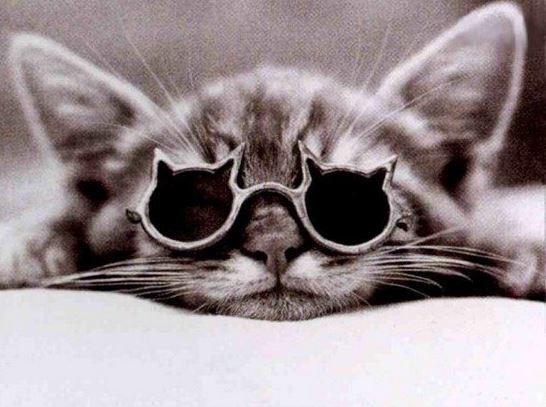 Obrýlená kočka
