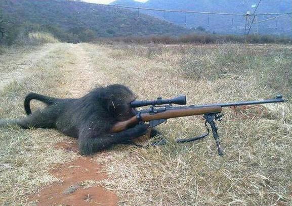 Opičák ostřelovač