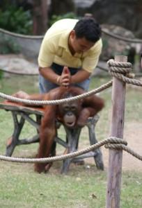 I opici bolí záda