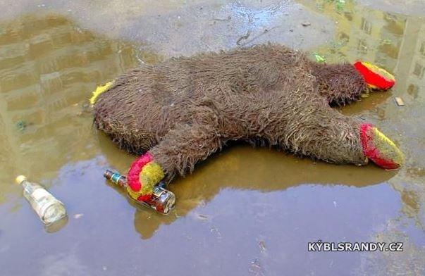 Opilý medvěd