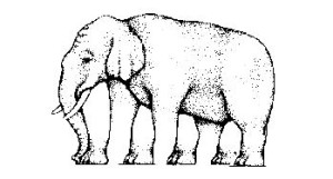 Optický klam slon