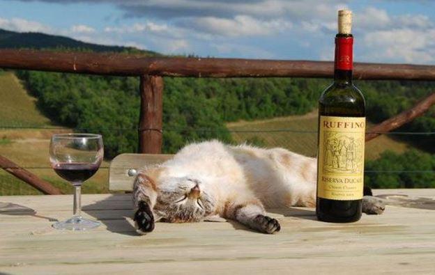 Ovíněná kočka