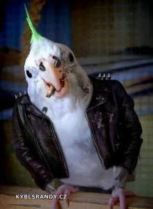Papoušek metalista